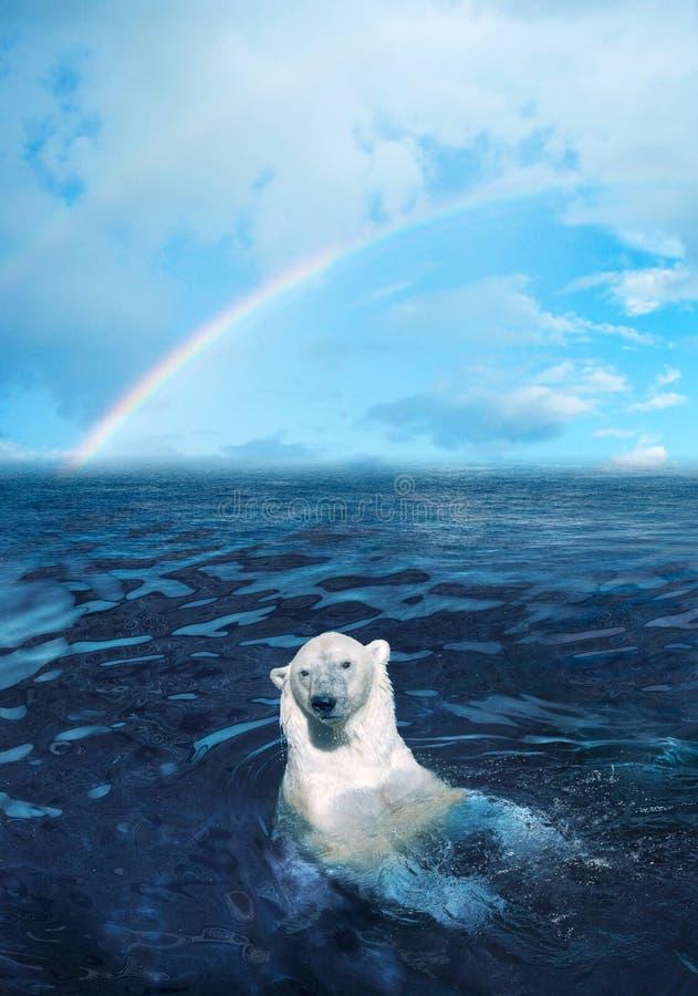 Free Polar Bear Royalty Free Stock Photo - 3078505