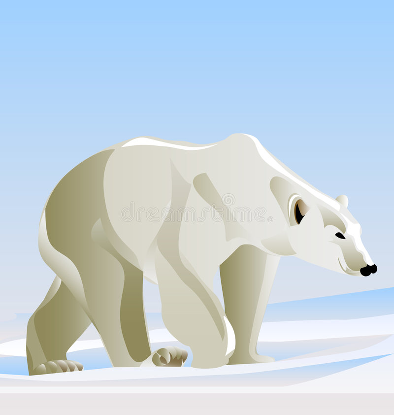 Free Polar Bear Stock Image - 9277041