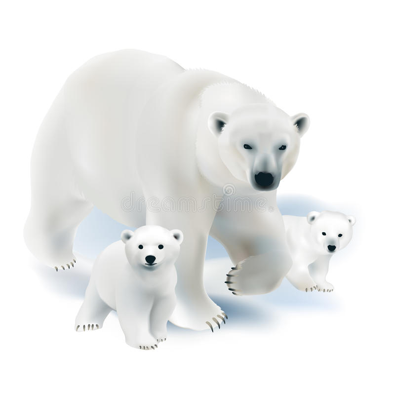 Free Polar Bear And Cubs. Stock Images - 62639224