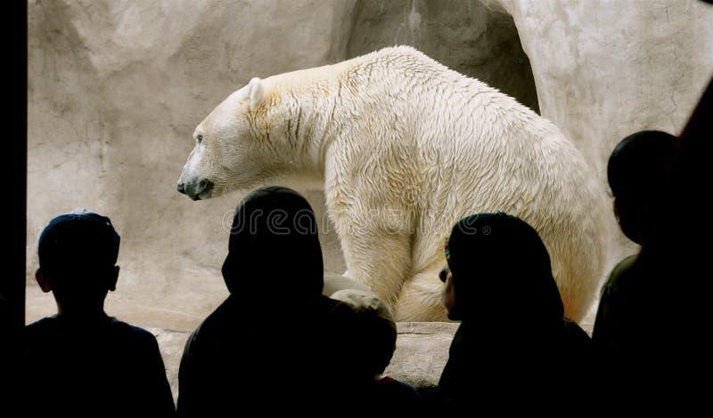 Polar Bear with audience.