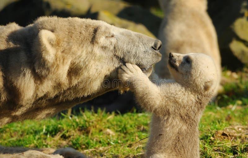 Polar bear and cub. Close-up of a polar bear and her cute cub