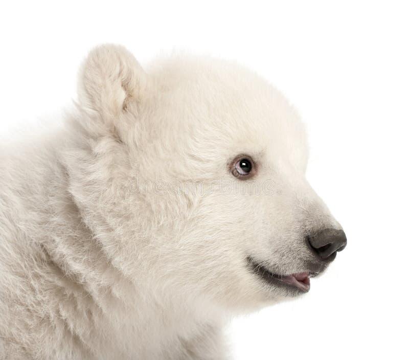 Download Polar Bear Cub, Ursus Maritimus, 3 Months Old Stock Image - Image: 25102647
