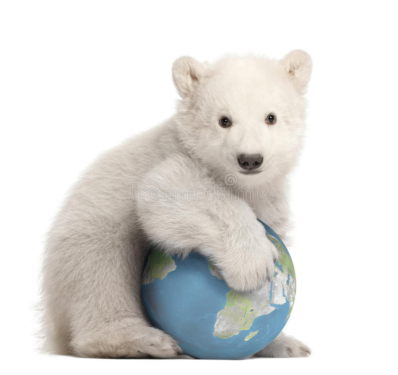 Polar bear cub, Ursus maritimus, 3 months old. With globe sitting against white background royalty free stock photos
