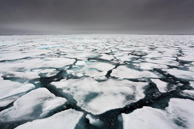 Polar bear on drift ice, Svalbard, Norway. Wildlife nature,. Europe. Land of ice royalty free stock images