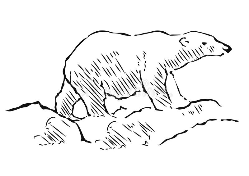 Drawing Lines With Polar Tracking : Polar bear hand drawn illustration walking