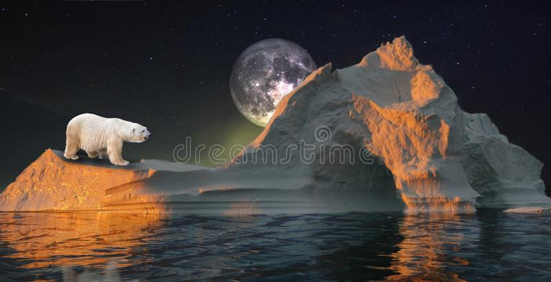 Polar bear on the iceberg with cave under the moon. stock images