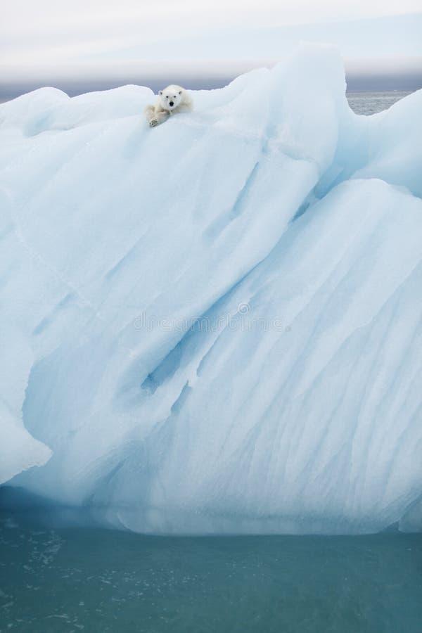 Polar bear on iceberg. A polar bear sitting on an iceberg on the Arctic Sea in Svalbard, Norway stock photos