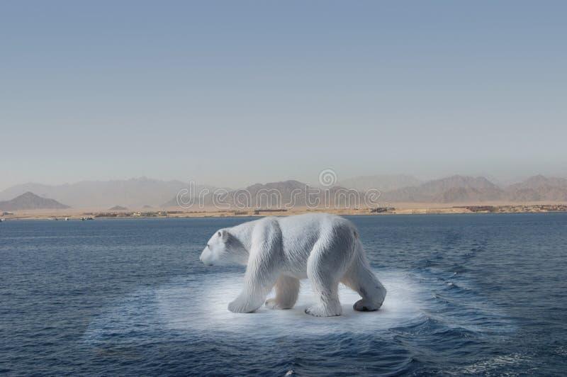 Polar bear on small iceberg stock images