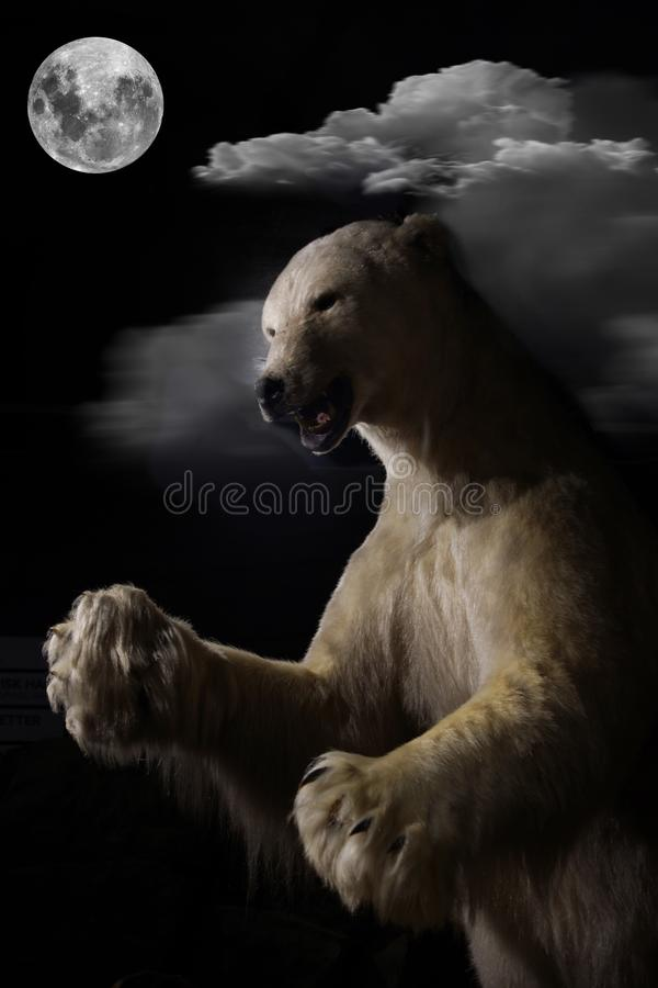 The polar bear stands full-length on a moonlit night.  stock image