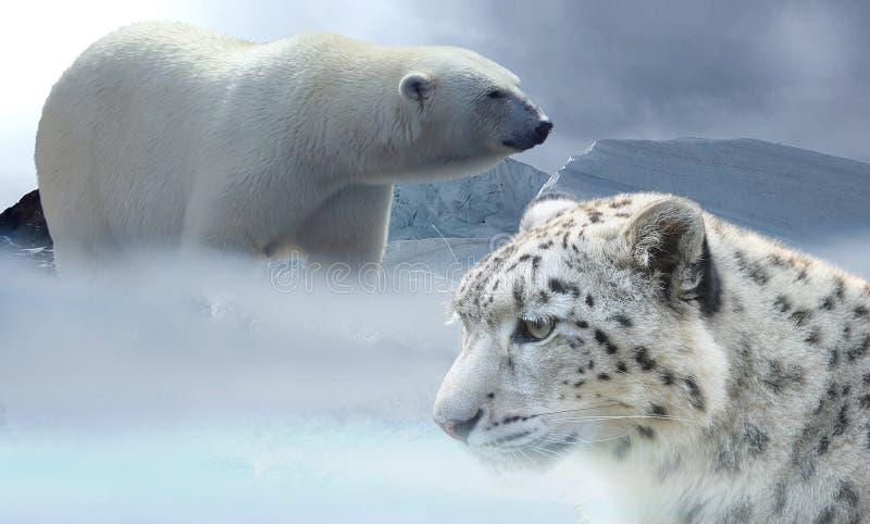 Polar Bear, Terrestrial Animal, Wildlife, Bear royalty free stock photography