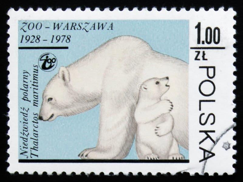 Polar bear (Thalarctos maritimus), circa 1978. MOSCOW, RUSSIA - FEBRUARY 19, 2017: A stamp printed in Poland shows a Polar bear (Thalarctos maritimus), circa royalty free stock photos