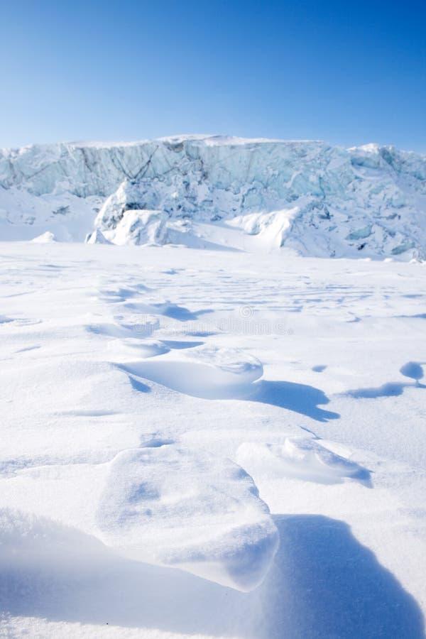 Polar Bear Track royalty free stock photography