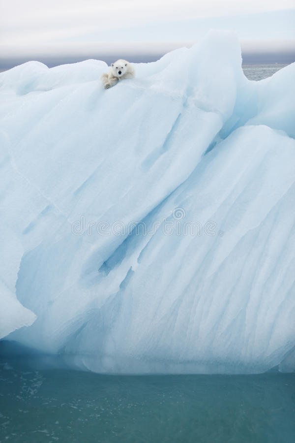 Polar betreffen Sie Eisberg stockfotos
