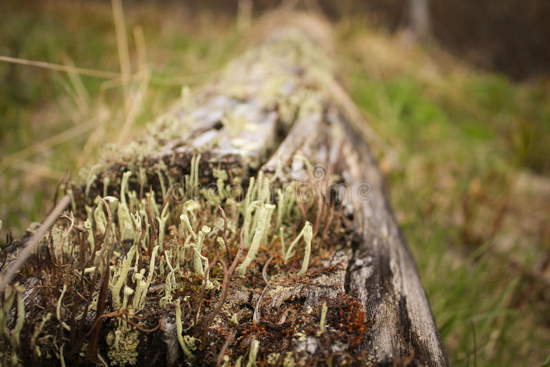 Polar mosses royalty free stock photography