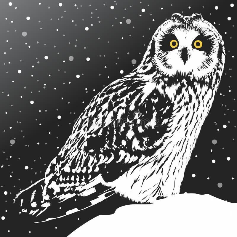 Polar owl vector illustration