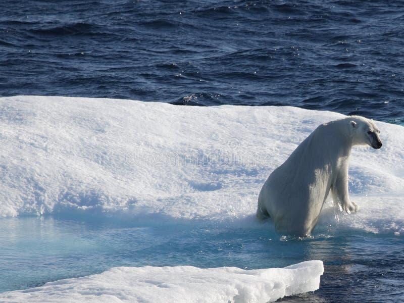 Polar refiera la masa de hielo flotante de hielo imágenes de archivo libres de regalías