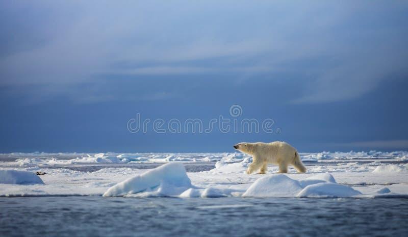 Polar Steps stock photos
