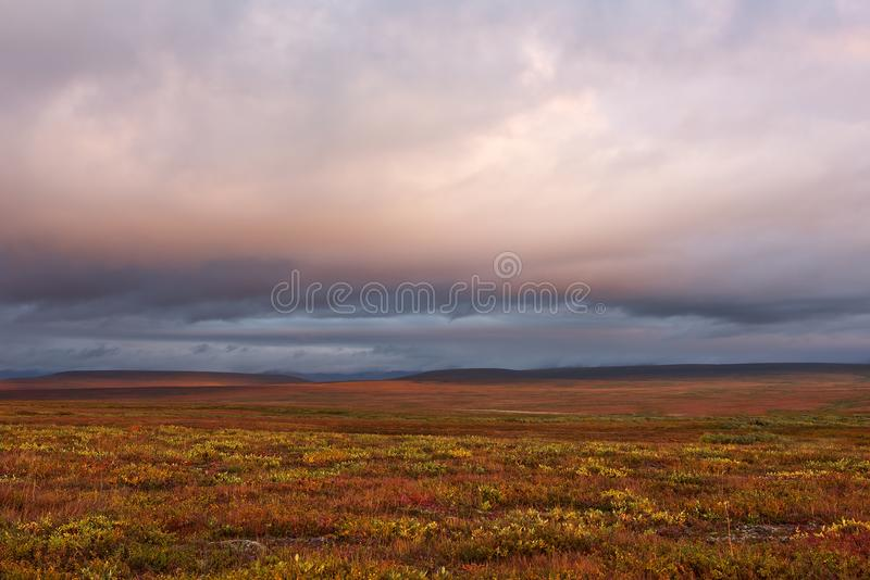 Polar tundra colorful vegetation. Yamal peninsula royalty free stock photos