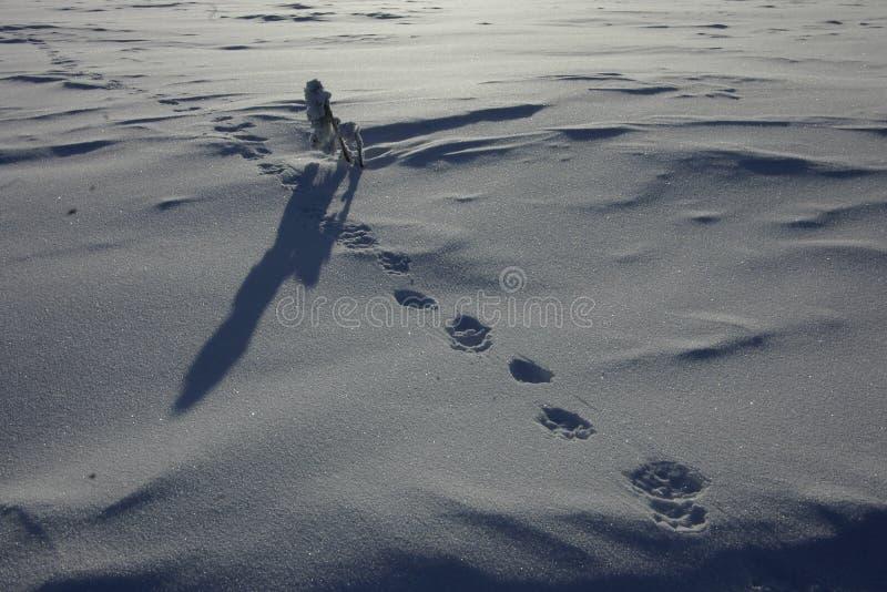 Download Polar Ural Animals stock photo. Image of brave, northern - 41889868
