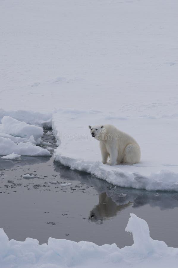 Polare riguardi il ghiaccio immagini stock libere da diritti