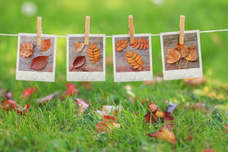 Polariod pictures of leaves hanging in a row royalty free stock photo