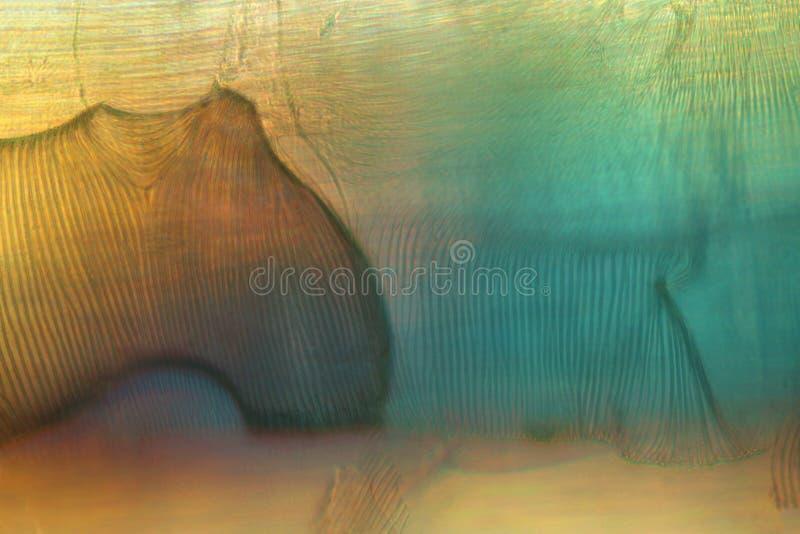 Polarizando, resuma el micrográfo de tubos traqueales de una mosca de grúa fotos de archivo