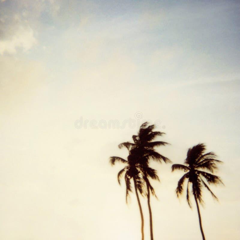 Polaroid de la palmera de Miami fotos de archivo