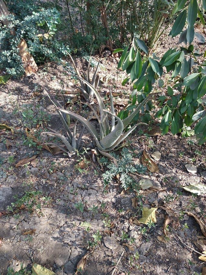 Polaroidoverdracht van de cactus stock afbeeldingen
