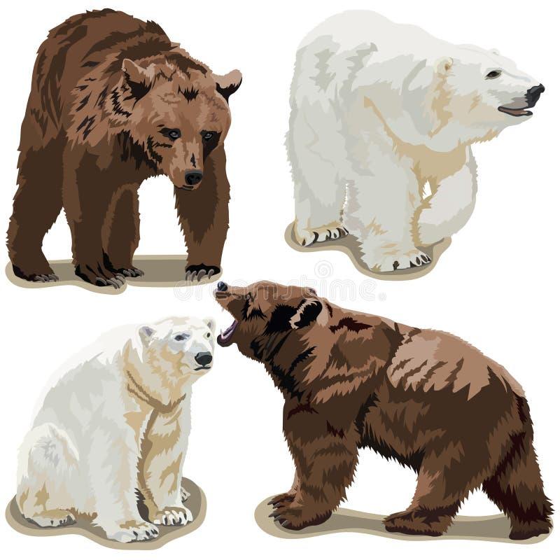 Polart och brunbjörnar vektor illustrationer