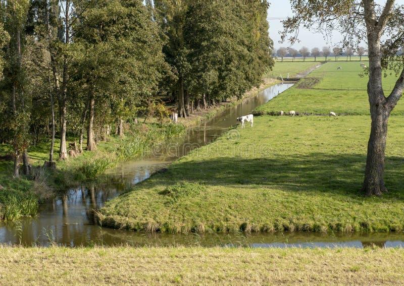 Polder met koeien, schapen en weelderig groen gebladerte, Nederland royalty-vrije stock foto