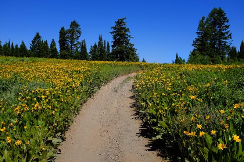 Pole Żółci Wildflowers i ślad zdjęcia stock