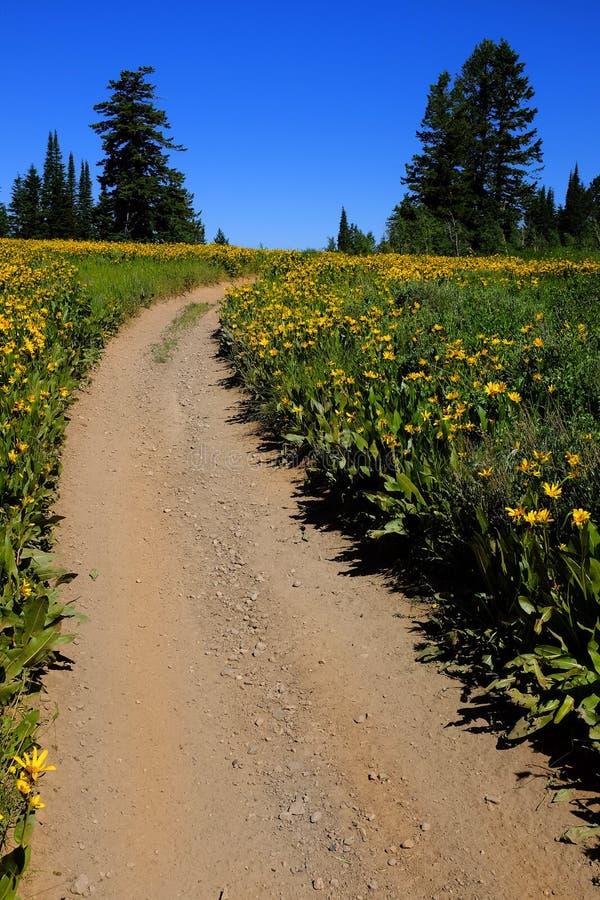 Pole Żółci Wildflowers i ślad zdjęcie stock