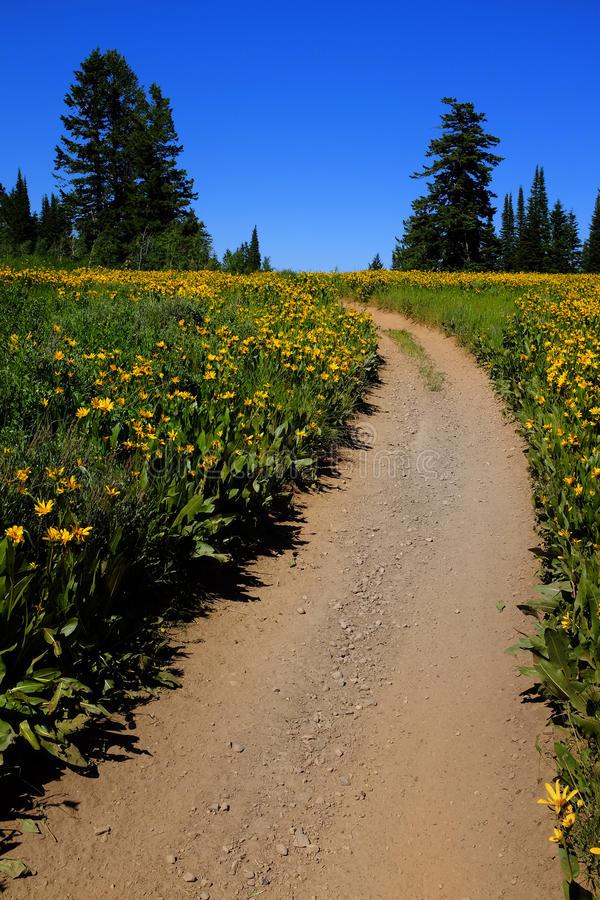 Pole Żółci Wildflowers i ślad obrazy royalty free