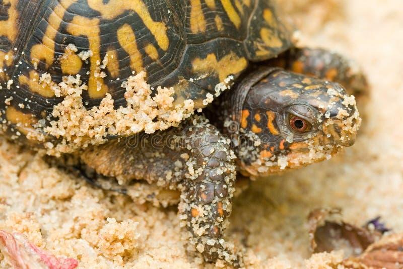 pole żółwia obrazy stock