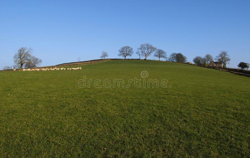 Download Pole obraz stock. Obraz złożonej z natura, wiejski, pogodny - 143927
