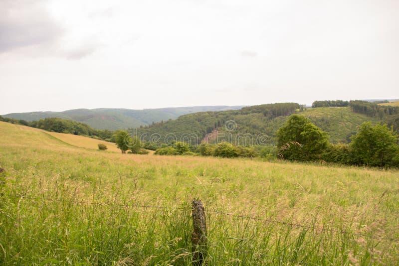 Pole blisko Eifel parkiem narodowym w Północnym rhine Niemcy fotografia stock
