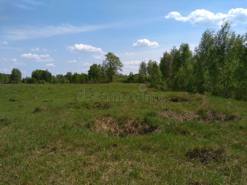 Pole blisko Malomorshevka zdjęcie stock