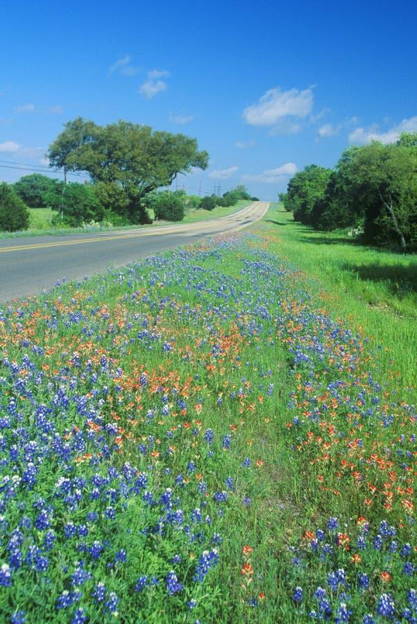 Pole bluebonnets w kwiat wiosny miasta Wierzbowej pętli Rd TX obraz stock