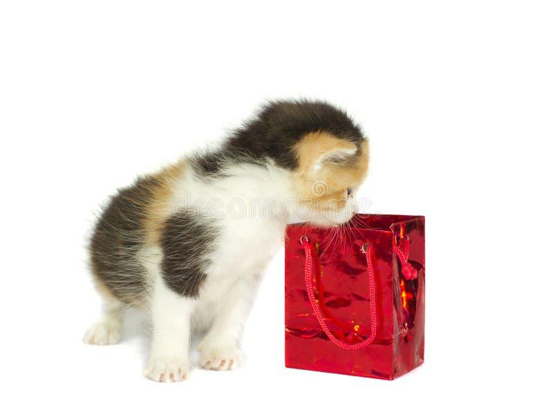 pole dar występować samodzielnie kotku obrazy royalty free