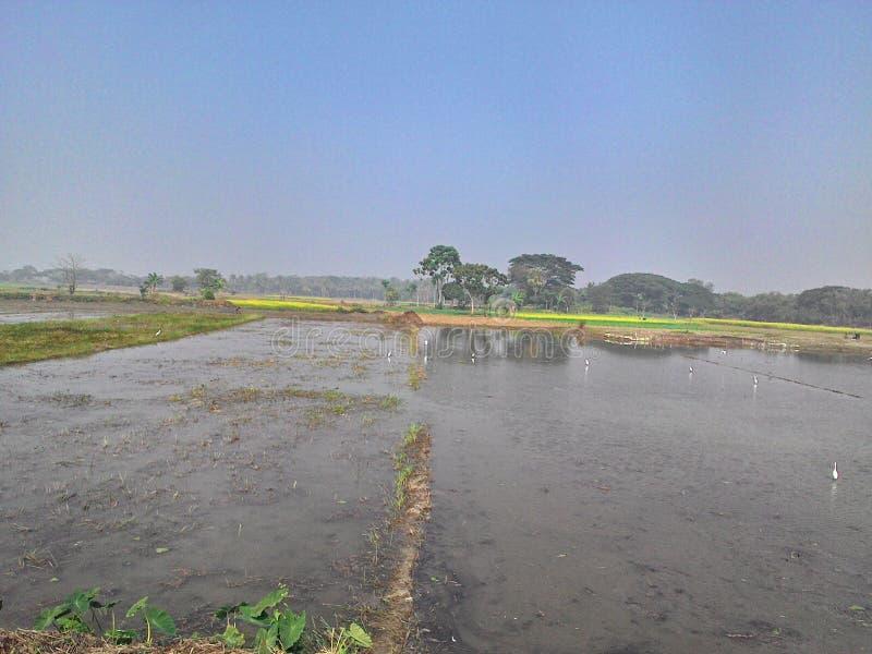 Pole dla zasadzać wodę notującą fotografia stock