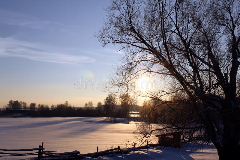 Pole, drzewo, zima i słońce ustawiający w wsi, zdjęcie royalty free