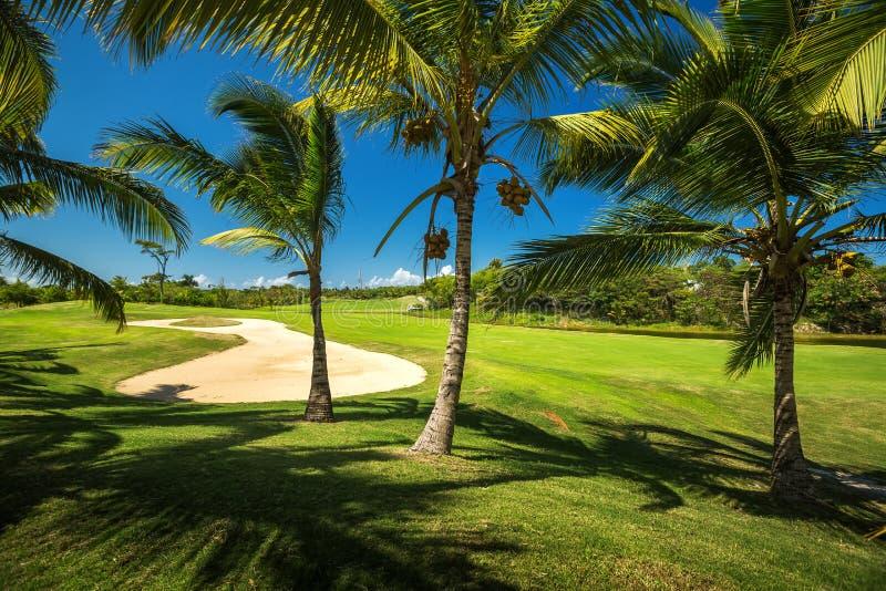 Pole golfowe Piękny krajobraz golfowy sąd z drzewkami palmowymi obraz stock