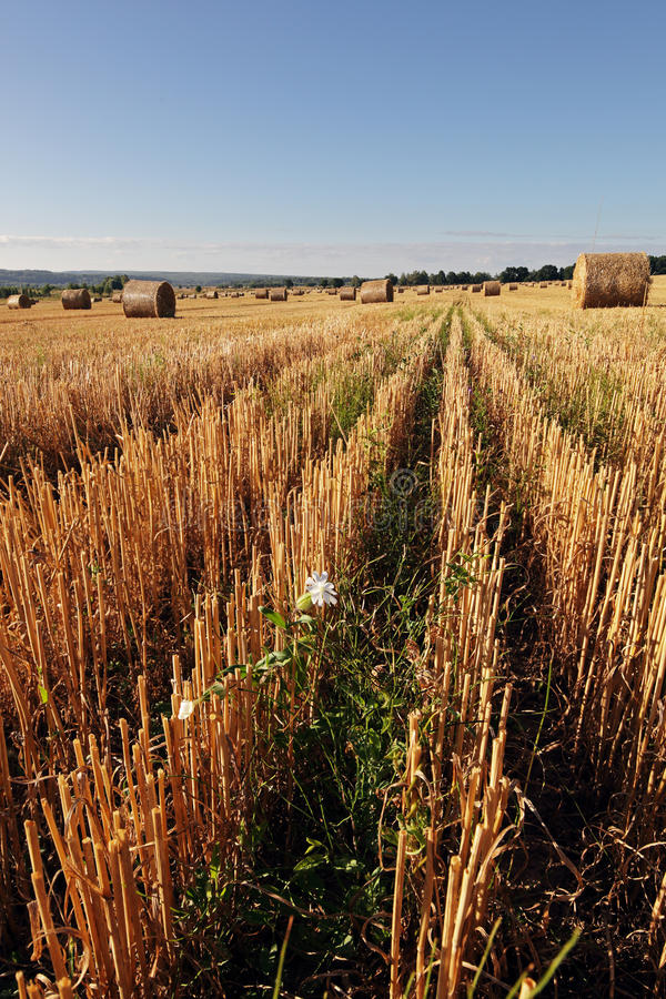 Pole haystacks -4 zdjęcie royalty free