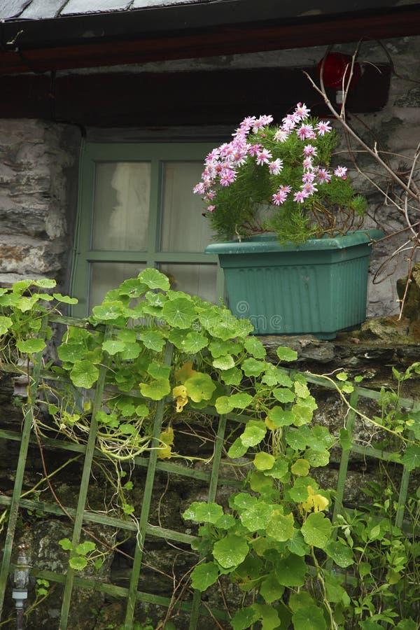 pole irlandzki okno zdjęcia royalty free