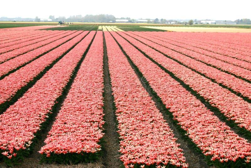 pole kwiatów obraz stock