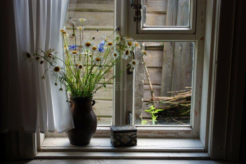 pole kwiatów dzban obrazy royalty free