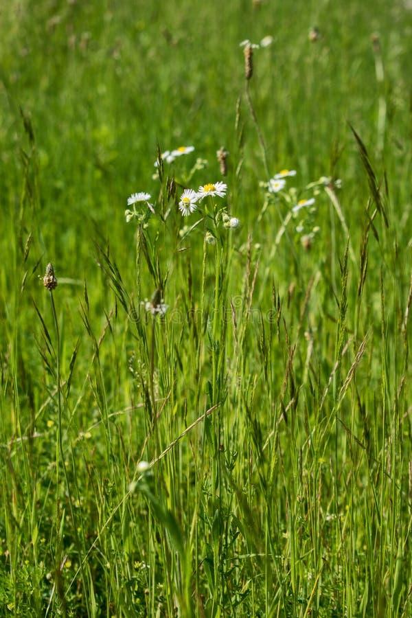Pole kwitnie na pięknym letnim dniu obrazy royalty free