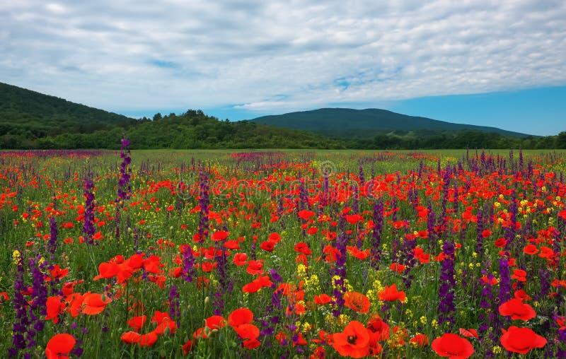 pole kwitnie wiosna Piękny krajobraz obrazy royalty free