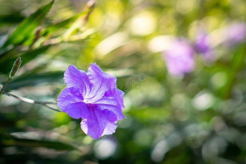 Pole piękny kwiat obraz royalty free