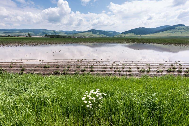 Pole pod wodą powodziową obraz stock
